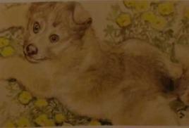 Любимые звери и птицы Татьяны Капустиной: тепло притягательной красоты (2014 Современный художник)